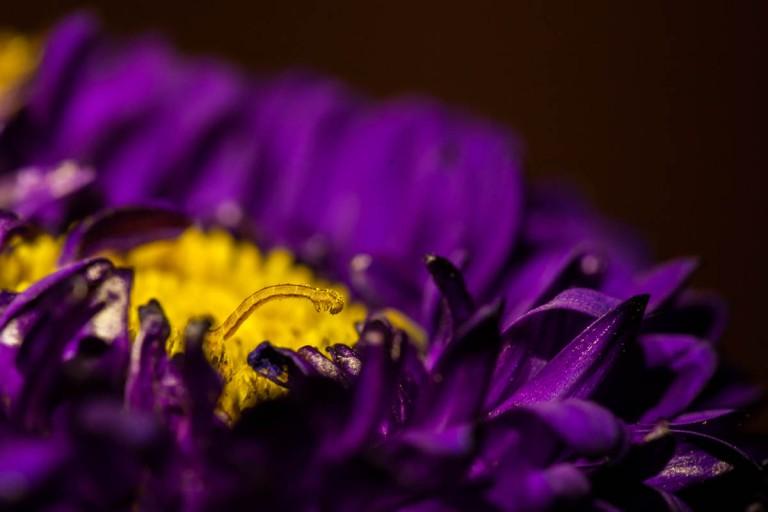 flower worm-2273