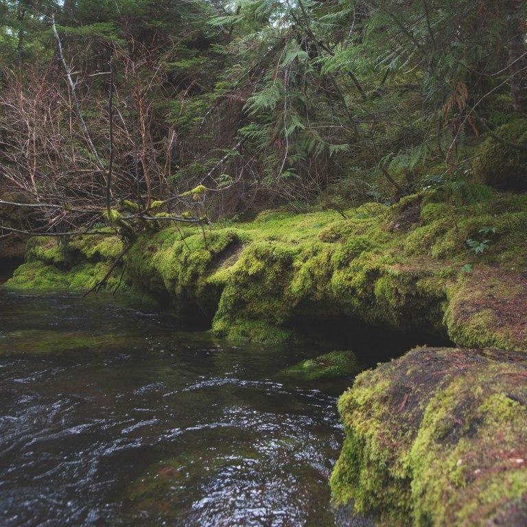 Koosah Fals- River re-edit-5781