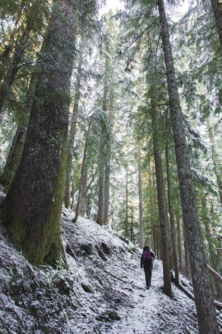 Mt St helens- Dava Path 3-6436