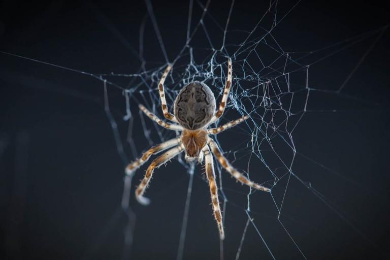 Spider dude-5741