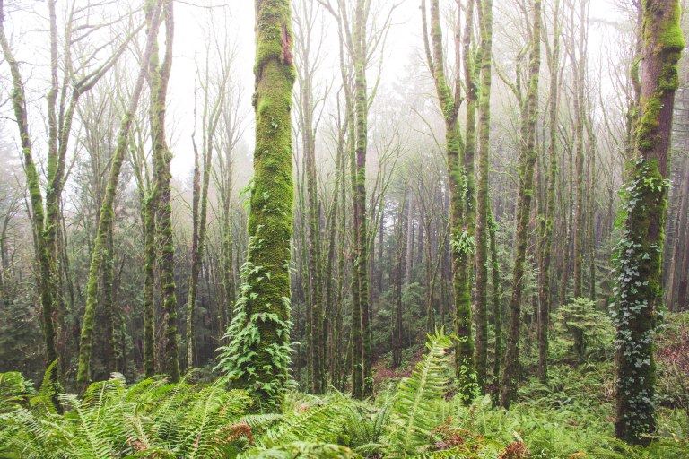 Forest park- Foggy trees-0273