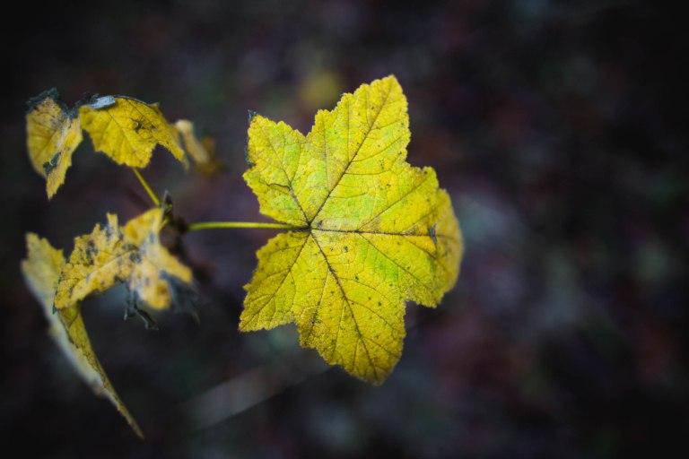 Forest park- Leaf detail-0412